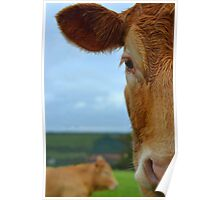 Half Cow Face Poster