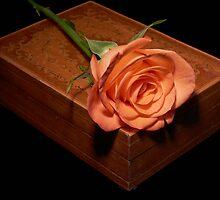 Rose on a box by Sara Sadler
