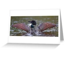 Loon Stretch - Common Loon Greeting Card