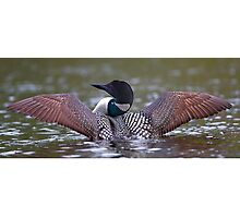 Loon Stretch - Common Loon Photographic Print
