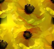 Yellow Poppies by Artisimo