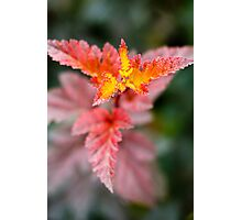Fire Plant  Photographic Print