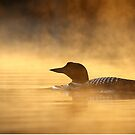 Into the Mist - Common Loon by Jim Cumming