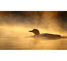 Into the Mist - Common Loon Photographic Print