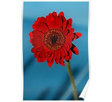 Red Gerbera Flower Poster