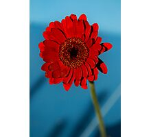 Red Gerbera Flower Photographic Print