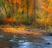 Brush Creek  by Steve  Taylor