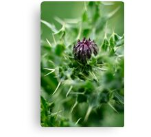 Spear Thistle Canvas Print