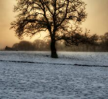 Old Oak Tree by English Landscape Prints