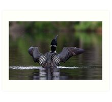Shake it off - Common loon Art Print