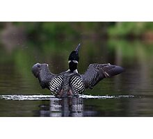 Shake it off - Common loon Photographic Print