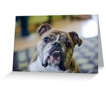 Cutie Pie, the bulldog! Greeting Card