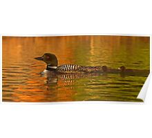 Follow the leader - Common loon Poster