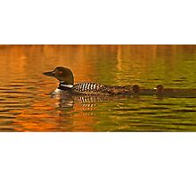 Follow the leader - Common loon Photographic Print