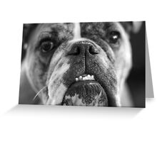 oh bulldogs, you make me smile. Greeting Card