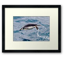 Swimming Penguin - Antarctica Framed Print