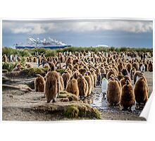 South Georgia King Penguin Colony Poster