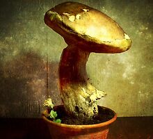 Alice's Mushroom by LeDormeurDuVol