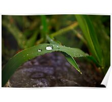 Rain Drops & Grass Blades Poster