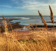 Whitby Coast by English Landscape Prints