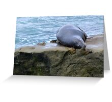 sea lions in san diego Greeting Card