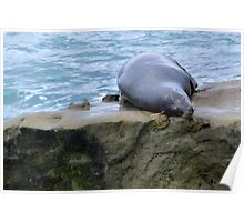 sea lions in san diego Poster