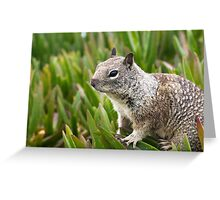 Wildlife in San Diego California Greeting Card