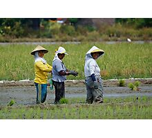 Planting Rice Photographic Print