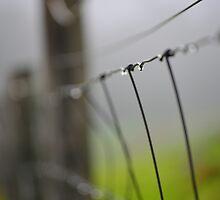Misty Morning Dew by Neil Bushby