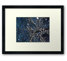 Looking Up In The Snow Into The Branches Framed Print