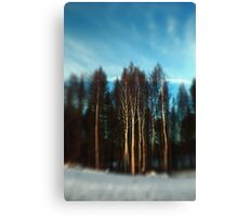 Birch Trees Lensbaby Style Canvas Print