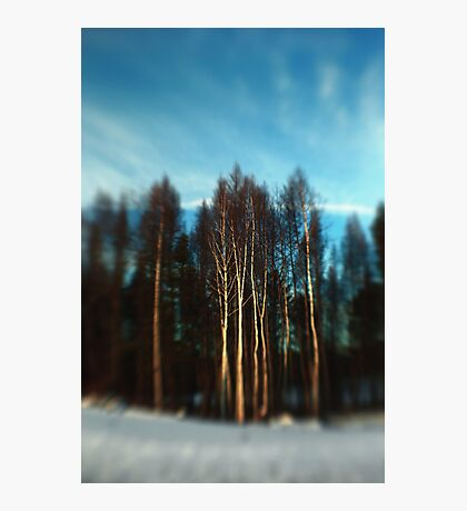 Birch Trees Lensbaby Style Photographic Print
