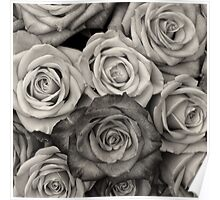 Shaded roses  Poster