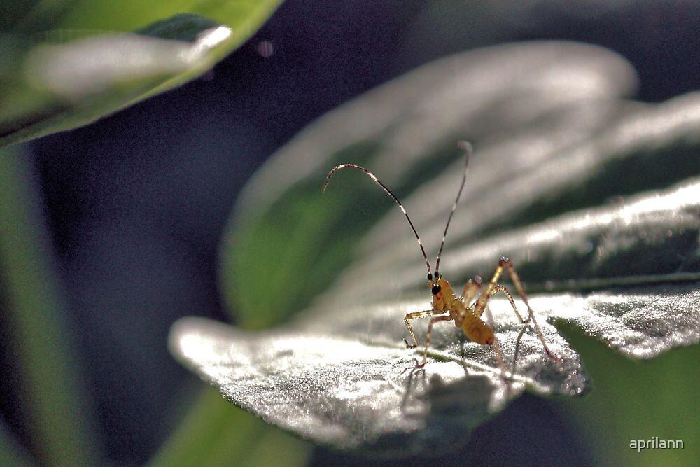 The Cricket Nymph by aprilann