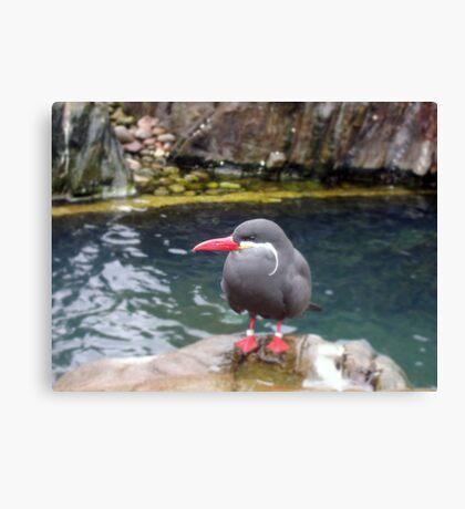 Inca Tern Canvas Print