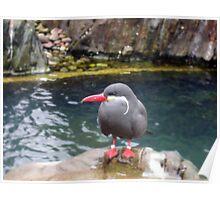 Inca Tern Poster