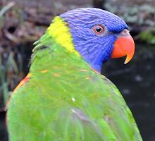 Rainbow Lorikeet by CreativeEm