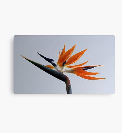 The bird of paradise flower Canvas Print