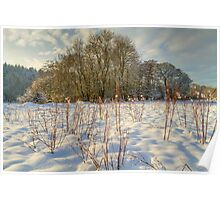 Winter landscape in snow Poster