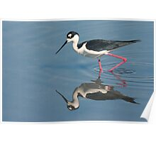 Black-necked Stilt - Huntington Beach California Poster