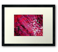 Fractals in a Pink robe Framed Print