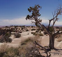 Desert Wilderness  by Brian Fowler