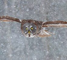 Snowfall - Great Grey Owl Sticker