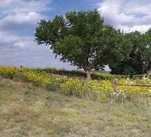 Oklahoma Farmland by Brian Fowler
