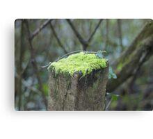 Mossy cap Canvas Print