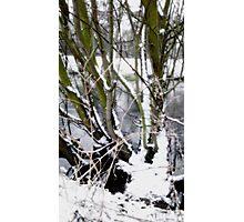 Snow Theme - Tree Views Photographic Print