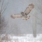 Towards the Heavens - Great Grey Owl by Jim Cumming
