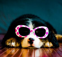 One cool dog. by TheJill