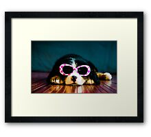 One cool dog. Framed Print