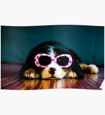 One cool dog. Poster